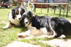 Sunny und Annie